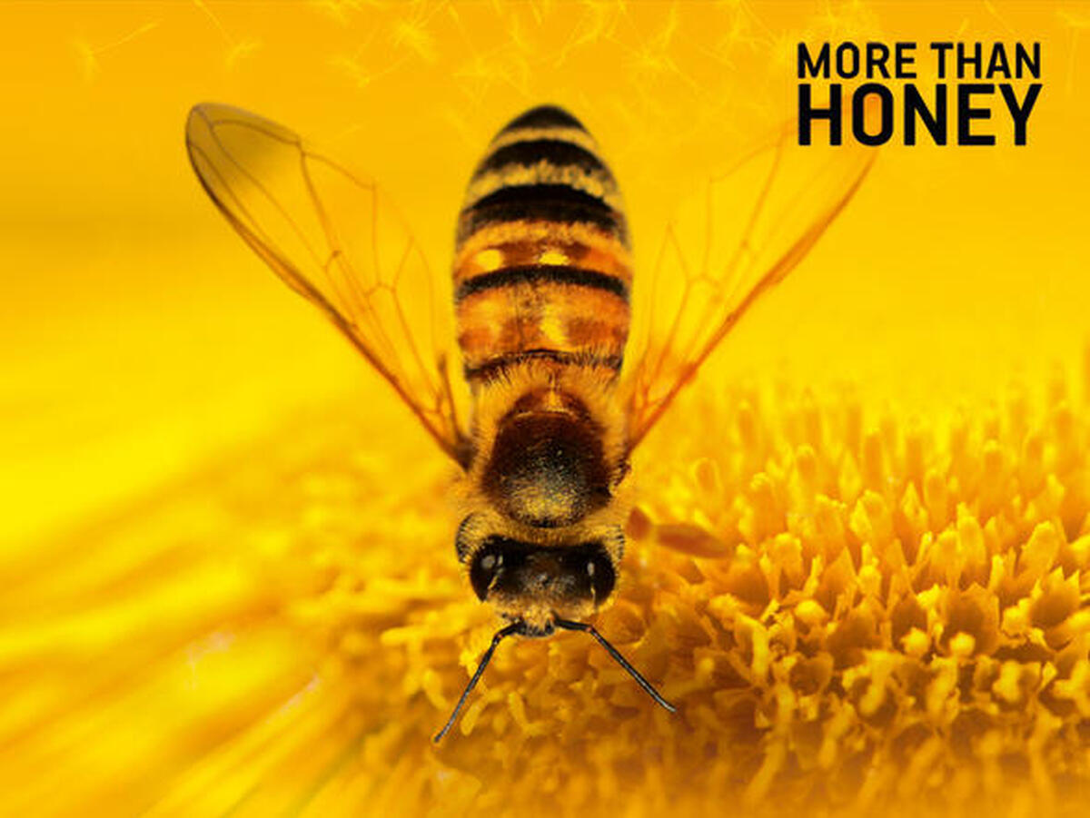 Filmmotiv Bitterer Honig - More than Honey