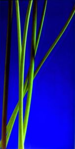 Stems with blue background