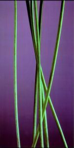 Stems with olive background